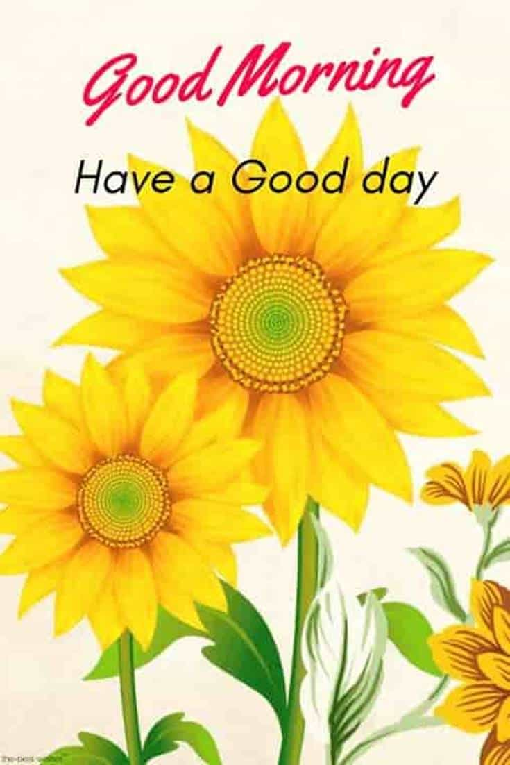 35 Amazing Good Morning Quotes and Wishes with Beautiful Images 6 #flowers
