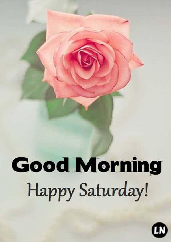 Happy Saturday, Good Morning!   Saturday morning images, Saturday greetings, Saturday morning quotes