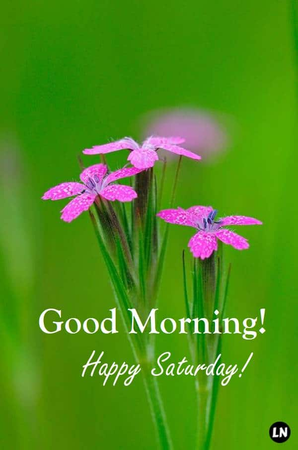 Good Morning Everyone, Happy Saturday. I pray that you have a safe and blessed day   Good morning saturday images, Good morning happy saturday, Good morning saturday