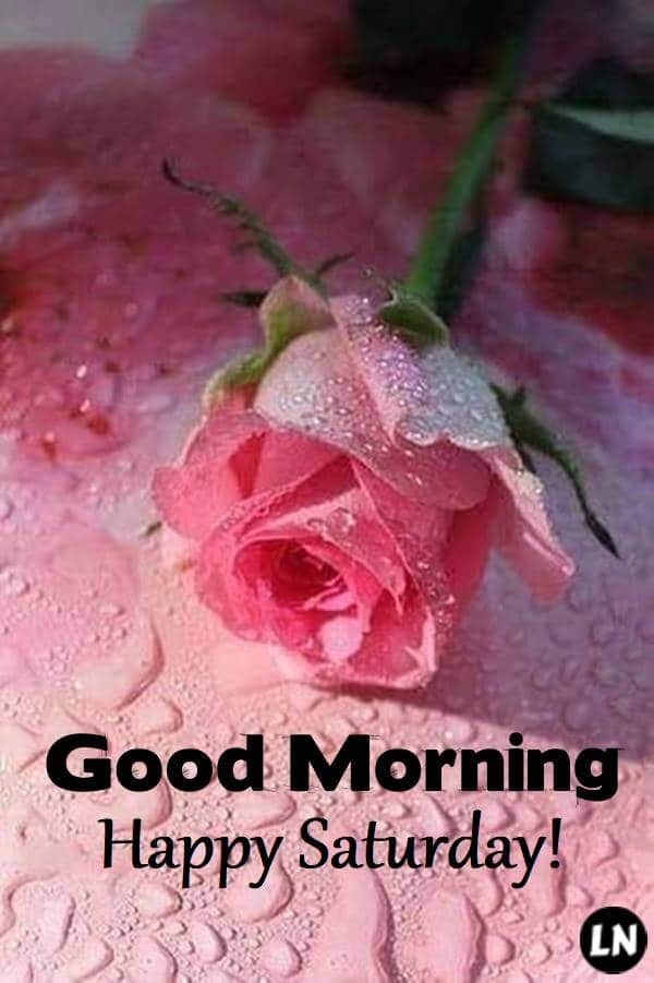 Good Morning Saturday   Best Saturday Morning Blessing Quotes Pictures