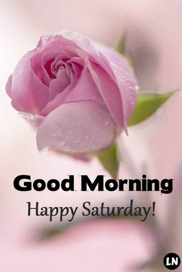 Good morning Saturday images, wallpapers, beautiful images, whatsapp images, flowers images & status