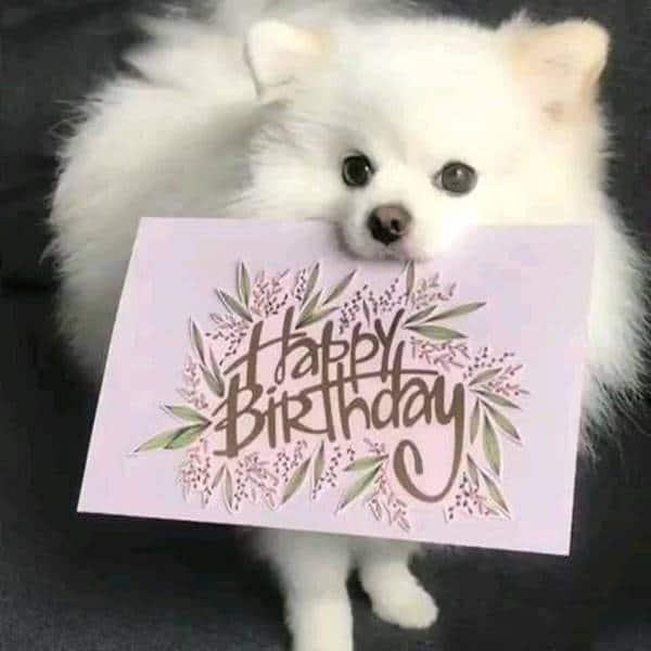 best birthday card quotes warm birthday wishes for boyfriend