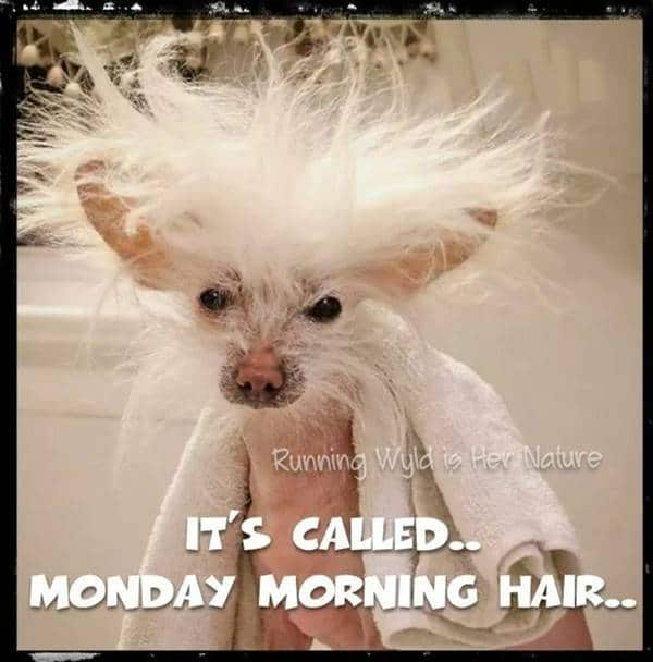have a good day funny meme | good morning its friday meme, beautiful sayings pics, perfect morning quotes