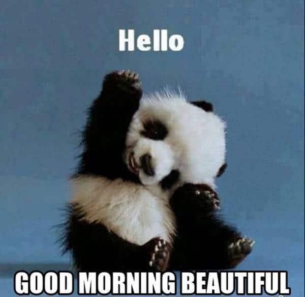 good morning sunshine meme | good morning world images, good morning beautiful quotes, morning memes