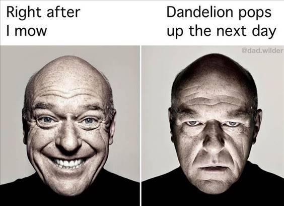 """Top 56 Hilarious Funny Memes Of All Time Real Funny Meme """"Right after I mow dandelion pops up the next day"""""""