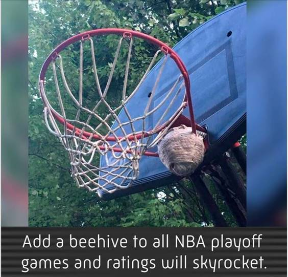 """Top 56 Hilarious Funny Memes Of All Time Funny Funny Meme """"Add a beehive to all NBA playoff games and ratings will skyrocket."""""""