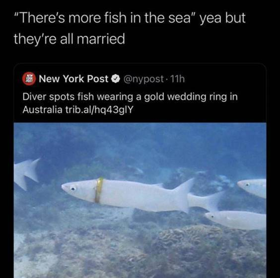 """Top 56 Hilarious Funny Memes Of All Time It Funny Meme """"There's more fish in the sea"""" yea but they're all married diver spots fish wearing a gold wedding ring in Australia trib.al/hq43gly"""""""