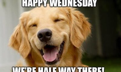 funny wednesday memes of all time with images
