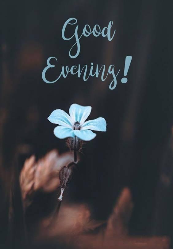 good evening friends photo 1