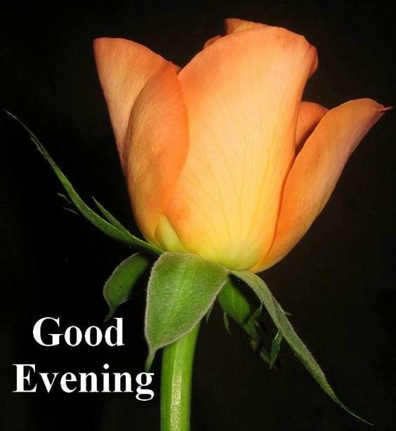 good evening red rose images