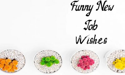 Funny New Job Wishes Messages Congratulations Messages