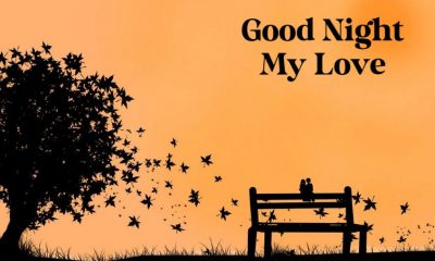 The Best Collection Good Night Love Quotes