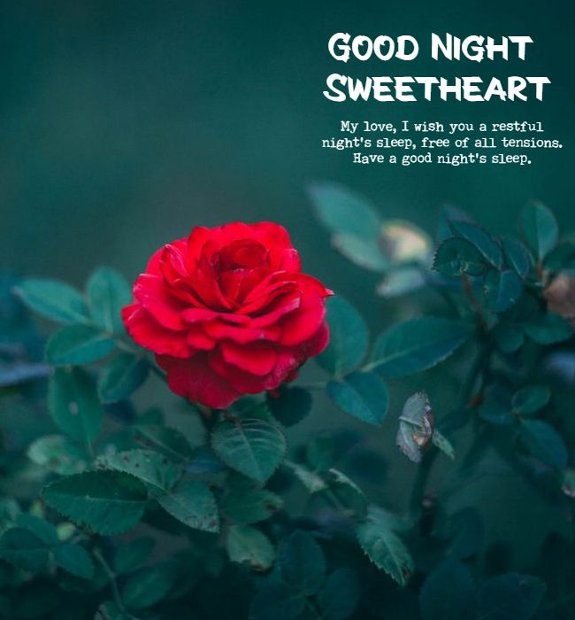 good night quotes for my love