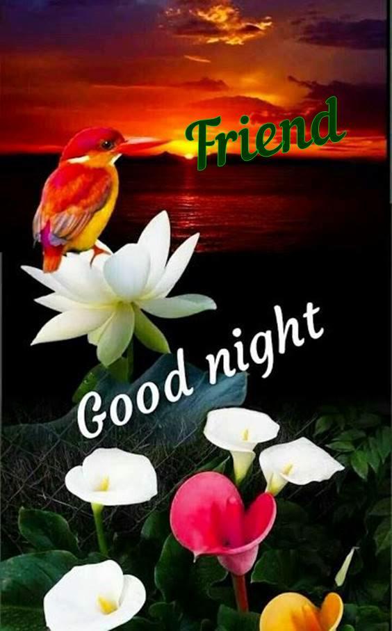 goodnight my friend