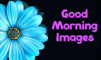 Special Good Morning Images With Pictures Quotes Wishes Messages